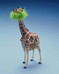 Giraffes_nest_with_giraffes_eggs_1